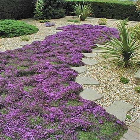 Decorative Stepping Stones Home Depot Creeping Thyme