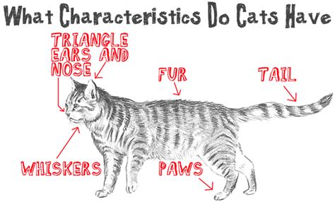 Drawing Cats Archives How To Draw Step By Step Drawing