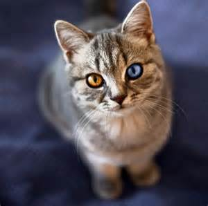 cat with different colored pictures of cats with different colored