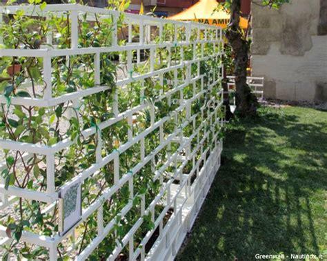 gelsomino terrazzo per il terrazzo un divisorio di gelsomino fiori e foglie