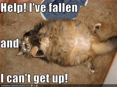 Help I Ve Fallen And I Cant Get Up Meme - help i ve fallen and i can t get up need a laugh
