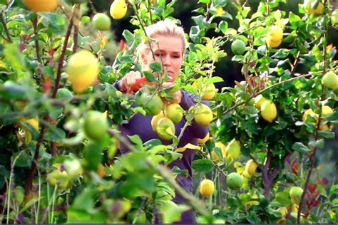 yolanda foster lemon cleanse yolanda foster health show off lemon detox on instagram