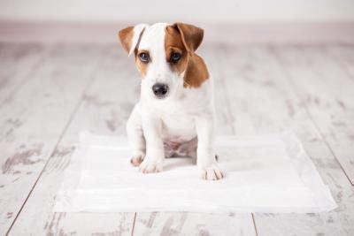 wann welpen stubenrein welpen stubenrein machen hunde welpen de