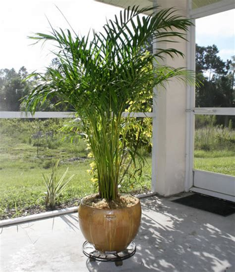 efficient humidifier areca palm metaefficient