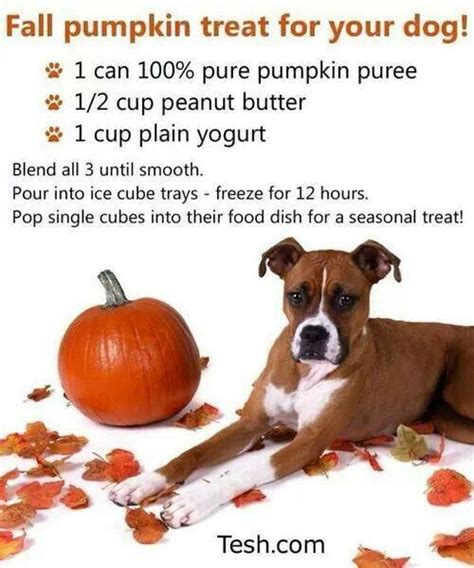 are cubes bad for dogs 68 best images about trick or treat style food on