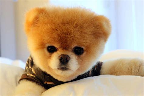 imagenes animales mas tiernos perro mas tierno del mundo viralini descargar