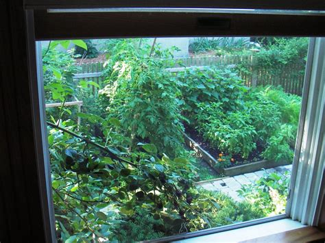 Window Vegetable Garden Skippy S Vegetable Garden August 2006