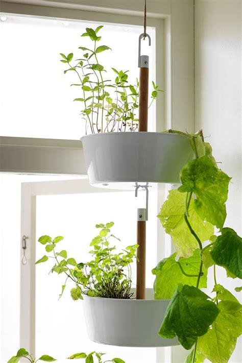 bittergurka hanging planter white ikea plants hanging