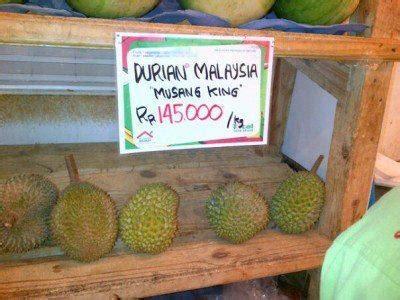 peluang usaha  bibit durian jual bibit durian beli