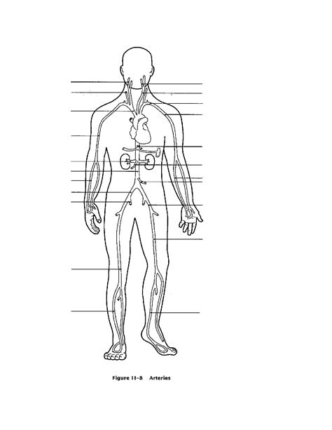 circulatory system for kids coloring pages coloring home