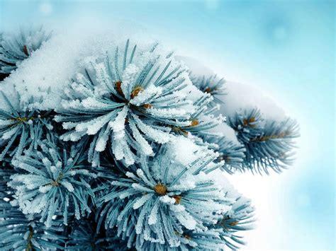 frozen wallpaper for chrome blue frozen macro plants snow wallpaper allwallpaper in