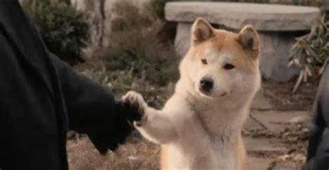 what of is hachi image gallery hachi
