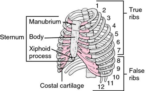 Xiphoid Process Lump