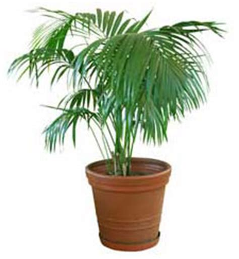 types of tropical house plants tropical house plants your easy growing friends