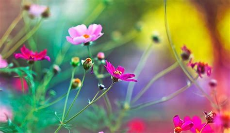 imagenes abstractas de flores imagenes de rosas las mejores rosas de internet