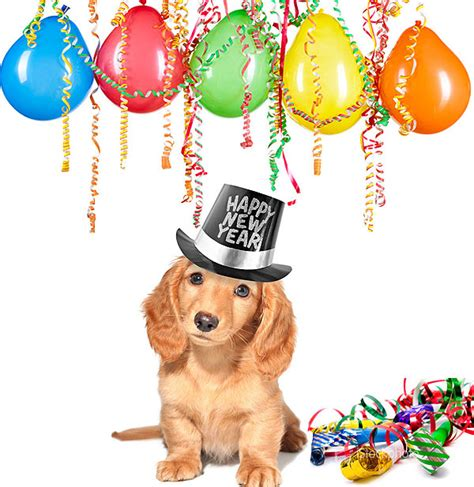 new year animal places pet hazards animal clinic