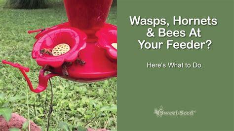 Keeping Bees Away From Hummingbird Feeders sweet seed micro batch bird feed