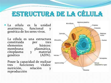 estructura de la clula eucariota estructura de la c 233 lula