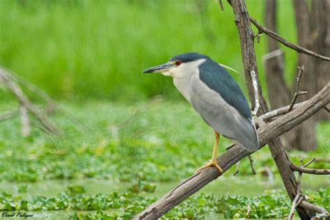 heron meaning 100 heron meaning 293 best a sedge of herons and