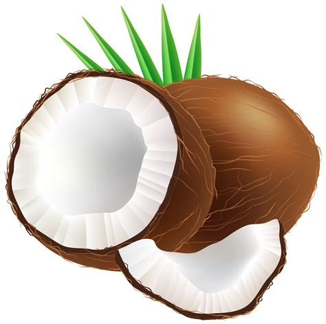 clipart png coconut png clip