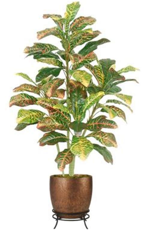 Floor Plants by Indoor Plants On Indoor Indoor House Plants