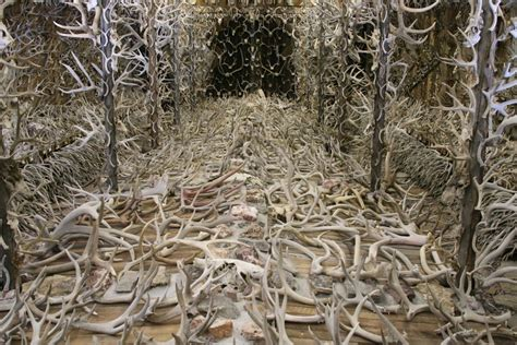 how to a to hunt shed antlers 5 antler collections to inspire your shed excursions