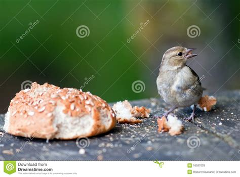 bird with a bread roll stock photos image 16557003