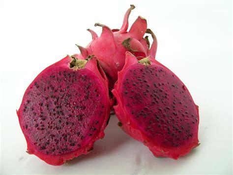 Jual Bibit Buah Naga Merah Fruit jual benih bibit buah naga merah fruit