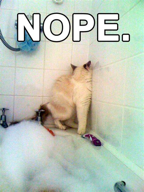 bathtub funny nope cat funny pictures bath photo funny