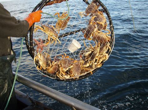 pa fish and game boat rs california dungeness crab season to open nov 1 cdfw news