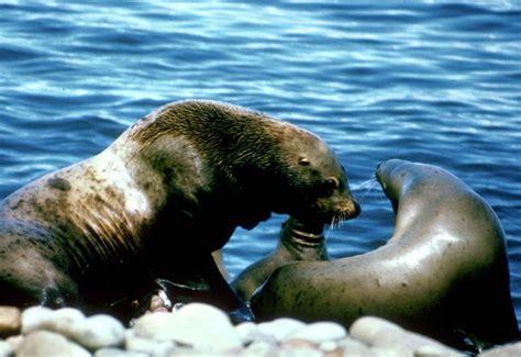 marine mammals list related keywords suggestions