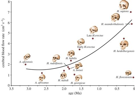 human evolution flowchart researchers say blood thirsty brains key to evolution of