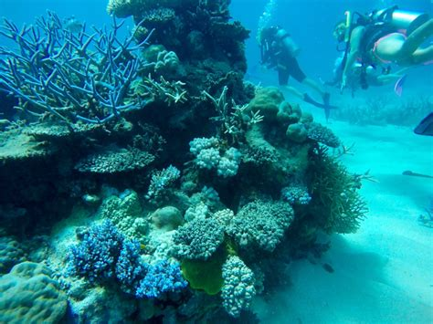 great barrier reef dive learning to dive on the great barrier reef migrating miss