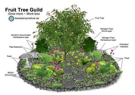 plant a fruit tree guild the resiliency institute - Permaculture Guilds Fruit Trees