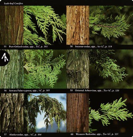 a field guide to western trees western united states and canada peterson field guides ebook kilima com canada national audubon society field guide