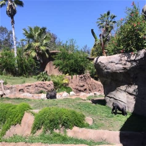 Griffith Park Botanical Gardens Los Angeles Zoo Botanical Gardens Los Angeles Ca United States A Of Gorillas