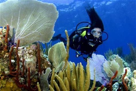 US Virgin Islands Scuba Diving   TheVirginIslands.com