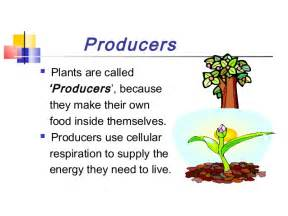 Plants That Do Not Need Sunlight by Energy Flow In Ecosystem