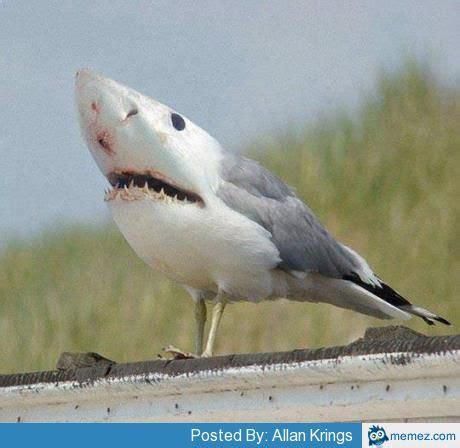 baby shark mix shark mixed with bird