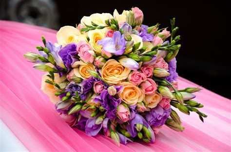 Free Images : purple, petal, summer, gift, yellow, pink