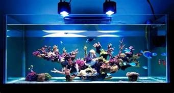 saltwater aquascape minimalist aquascaping page 3 reef2reef saltwater and