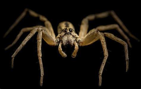 Garden Spider New York Poisonous Spiders In New York Ehow