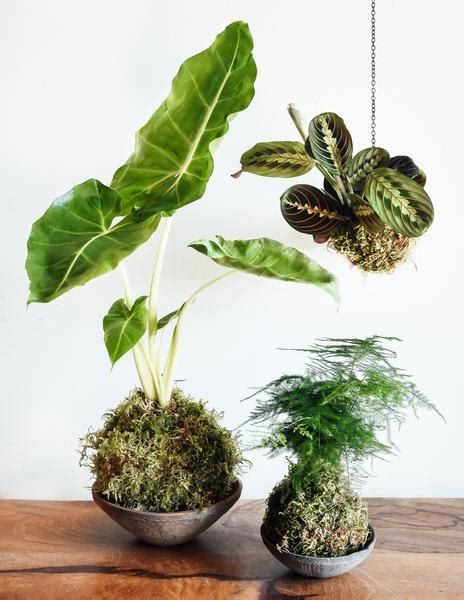 kokedama workshop pistils nursery webshop