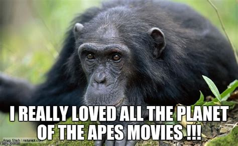 Ape Meme - chimp actors were the best imgflip