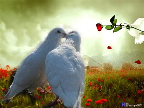 free download images of love birds amazing wallpapers love bird beautiful wallpapers 11770 amazing wallpaperz