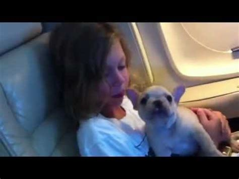 flying with a pug in cabin puppy time on a plane newfoundland funnydog tv
