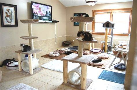 Cat Room Ideas by Cat Room They Don T Need A Tv Haha Animal Shelter Ideas