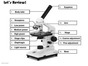 microscope diagram to print diagram site