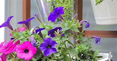 make a vertical garden in 3 easy steps hometalk