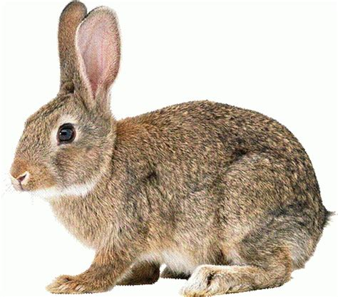 покусал кролик фото